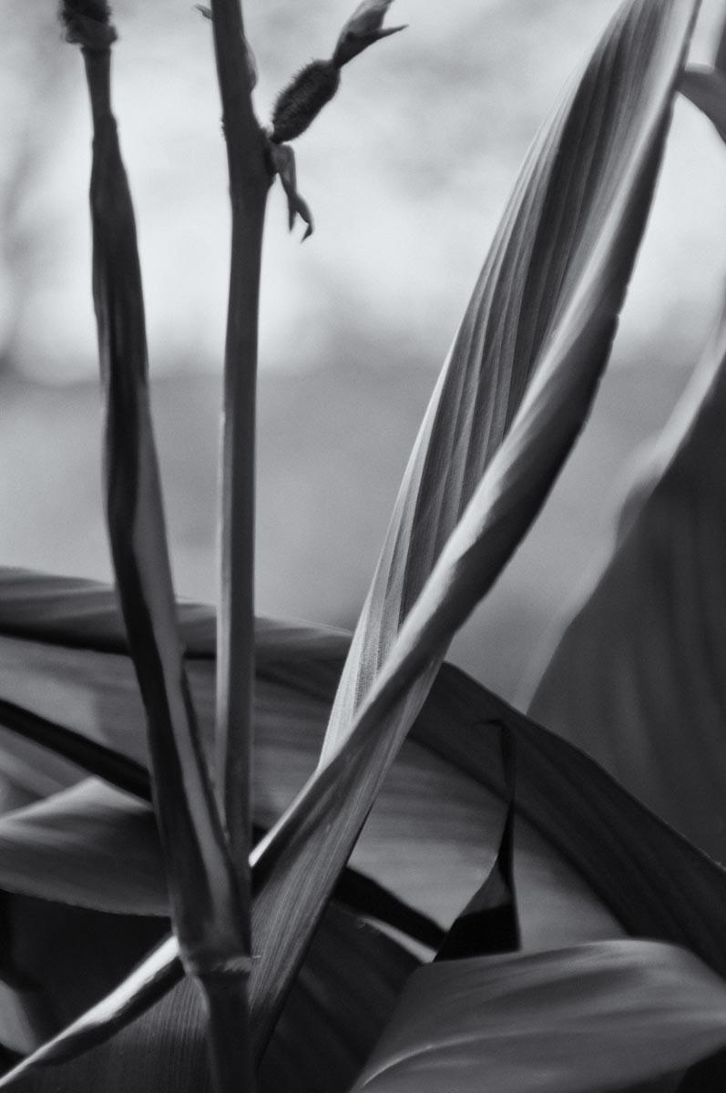 Plant - 085