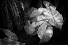 Botanica - 449