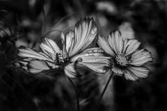 Botanica - 448