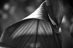 Leaf Study - 435