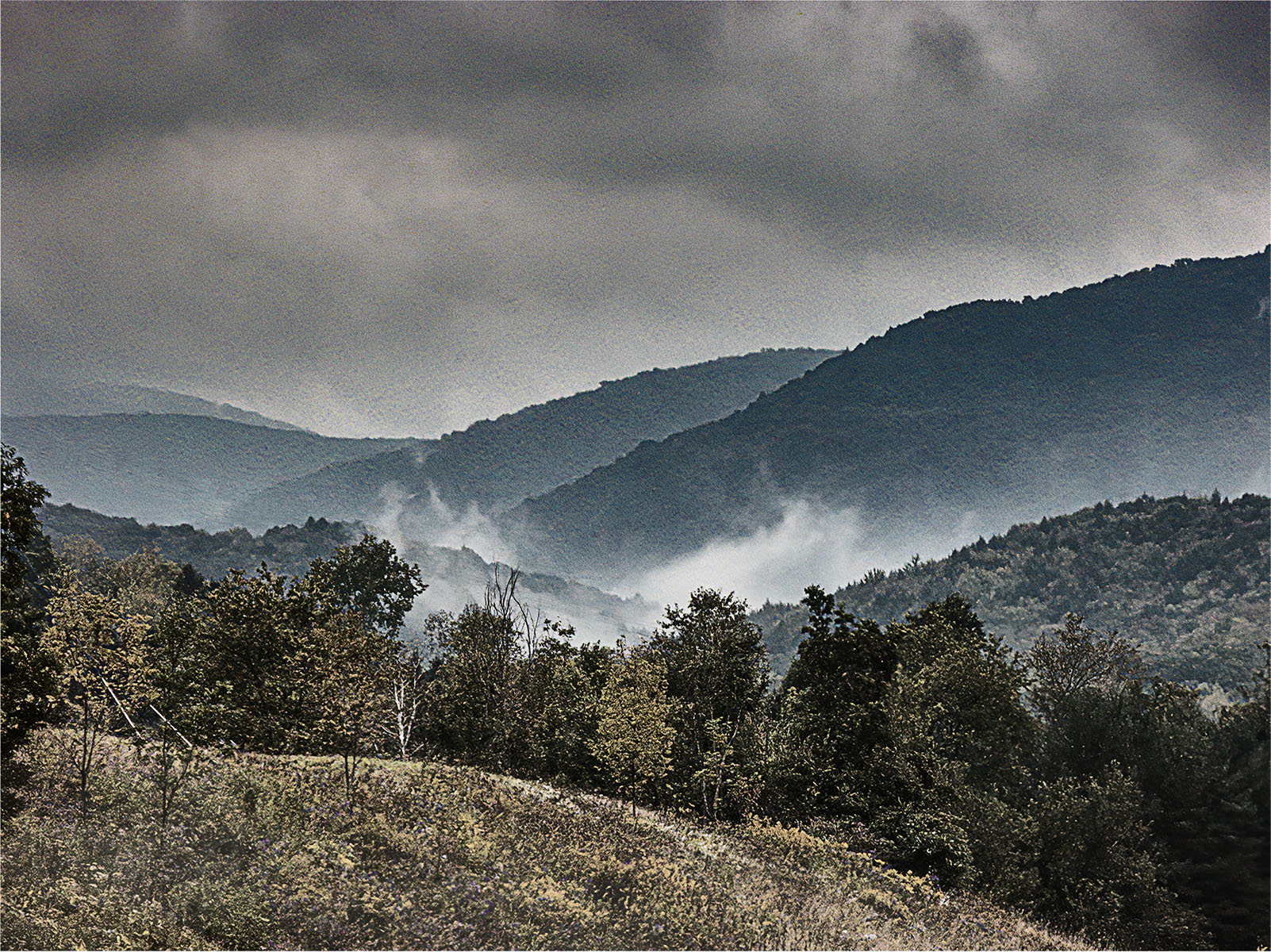 Mist in the Valley - 537