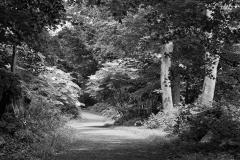 Paradise Garden - Westchester NY - 437