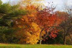 Trees Botanical Garden - Bronx NY - 443