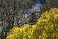 Central Park Gothic - 504