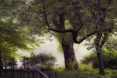 Pond and Tree - Central Park NYC  - 311