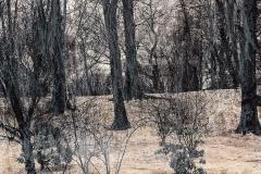 Schnee am Wald - 477