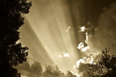 Skyscape with Trees - 432