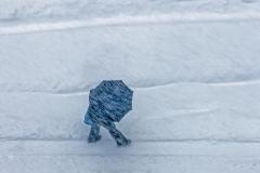 Winter Walk - 342